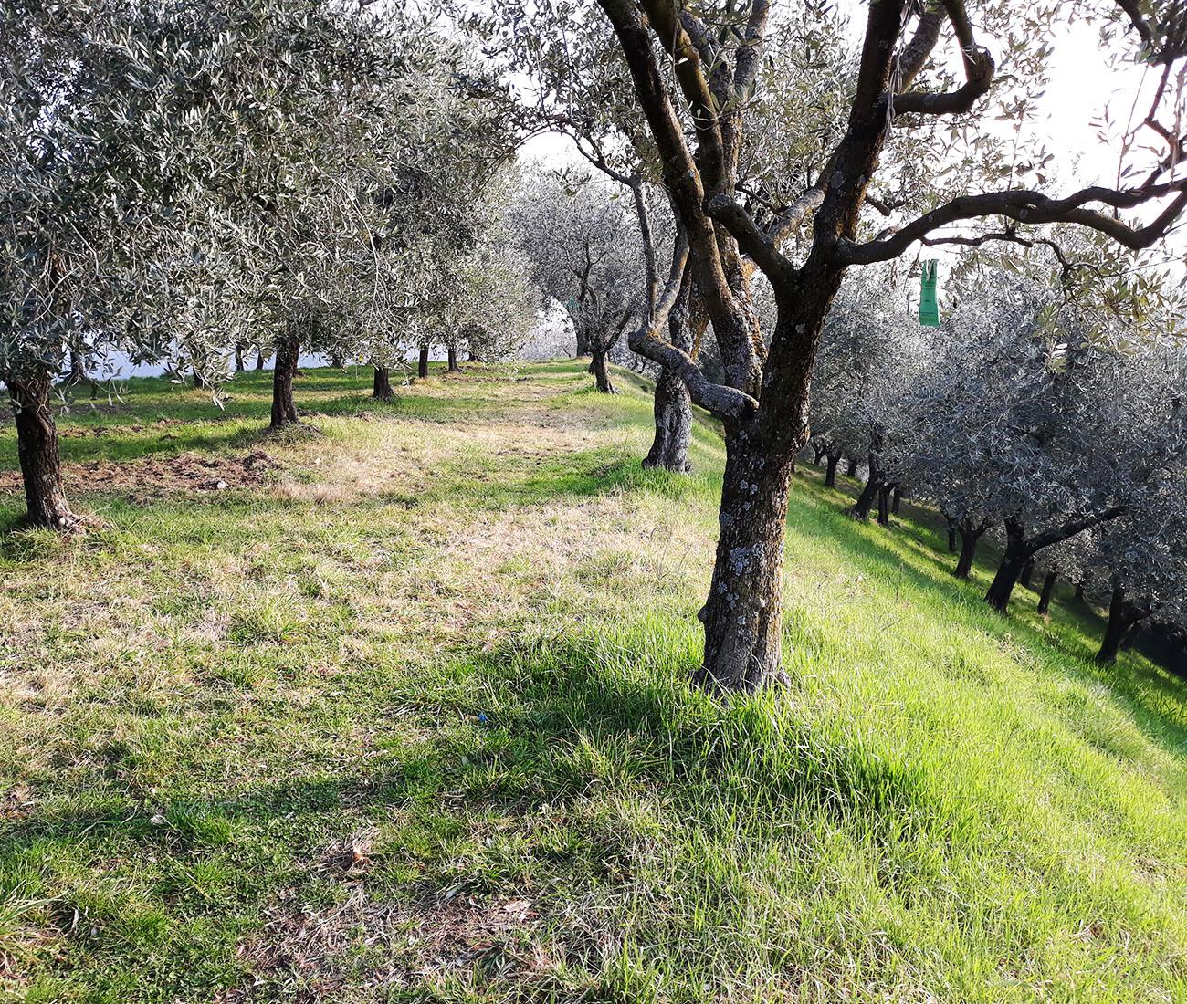 Diesel Farm – Nuova cantina vinicola e agriturismo a Marostica